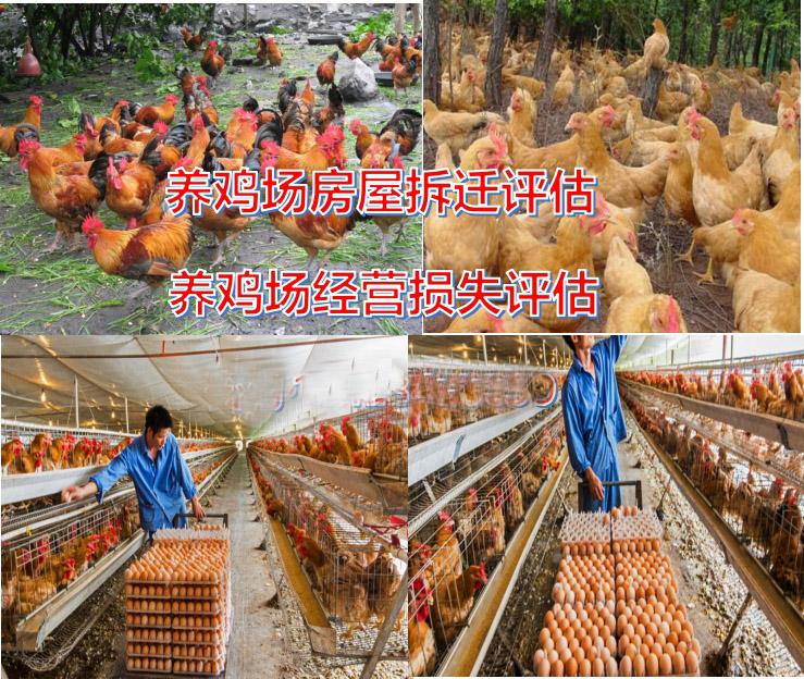 枣庄养殖场资产评估
