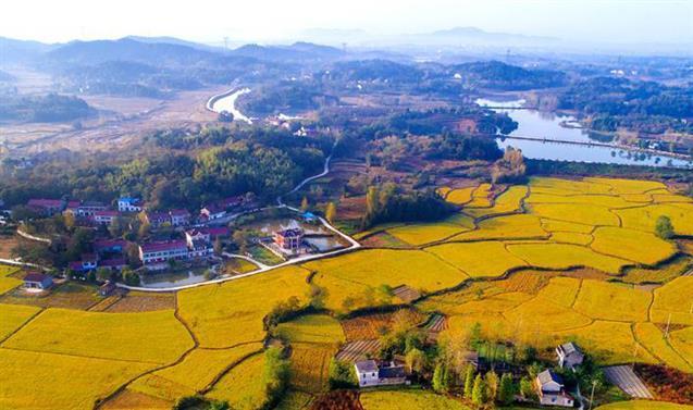 湖北乡村振兴项目