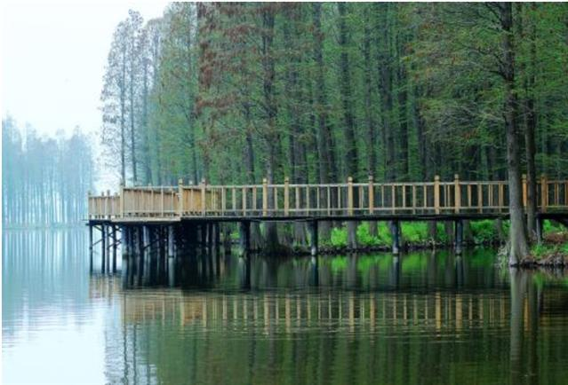 湖北森林公园营销成功案例