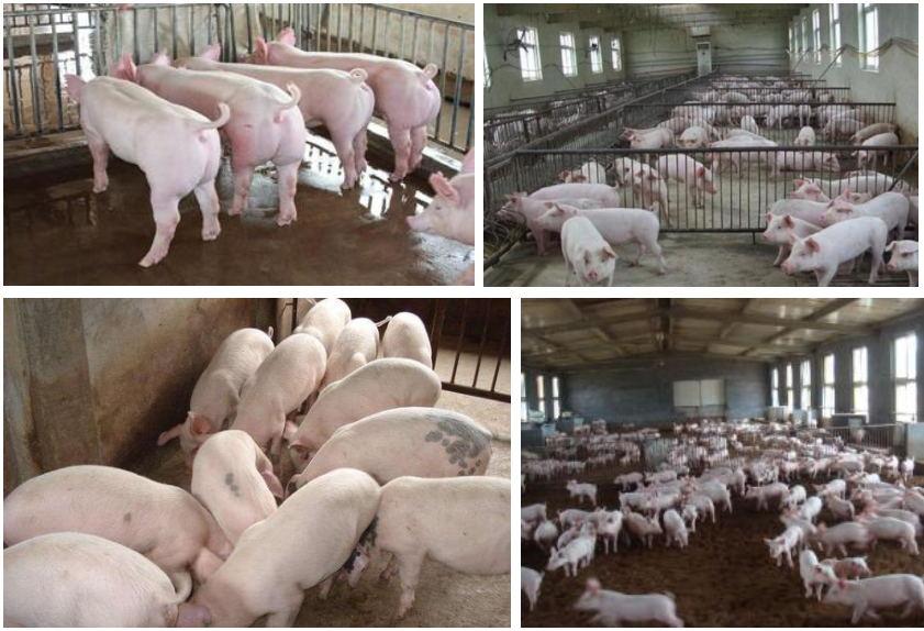 黔东南养殖场评估
