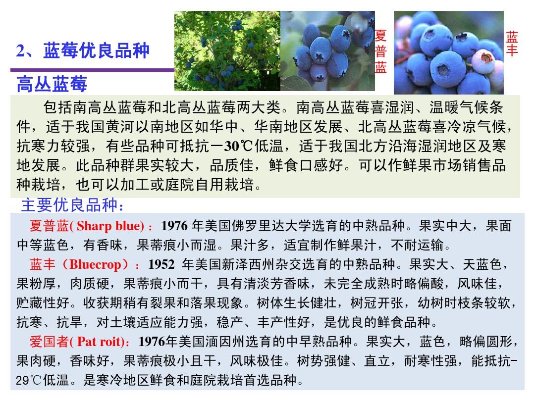 蓝莓苗基地  兔眼蓝莓苗基地