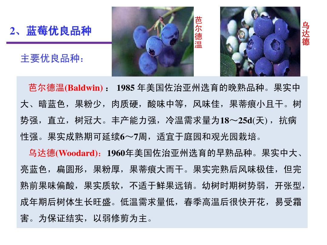 蓝莓苗价格  钱德勒蓝莓苗价格