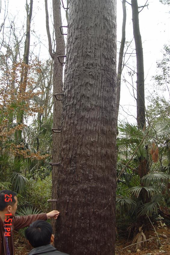 生產仿生樹