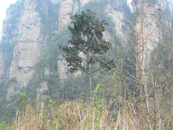 無錫仿生樹
