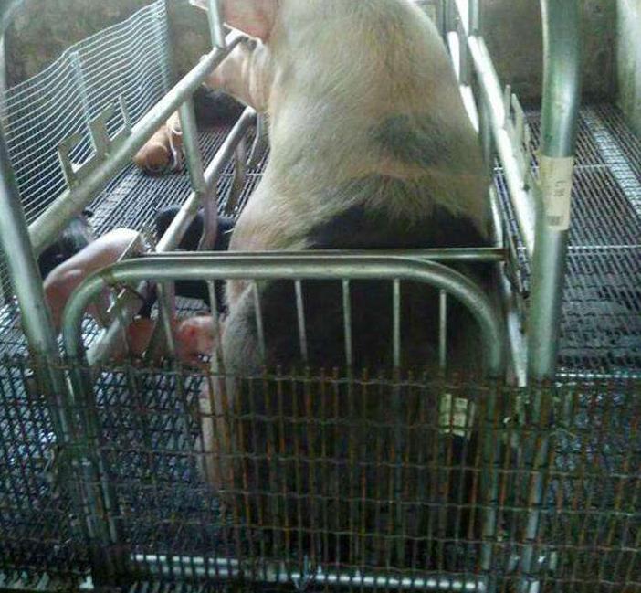 轧花养猪网 轧花网卷