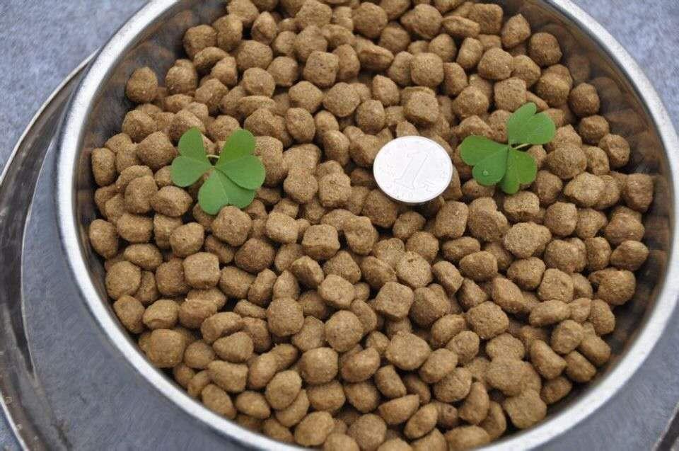 山东宠物食品代加工 狗猫粮代工 狗粮批发 宠物零食贴牌代工
