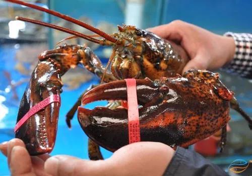 南京进口水产品清关报关流程