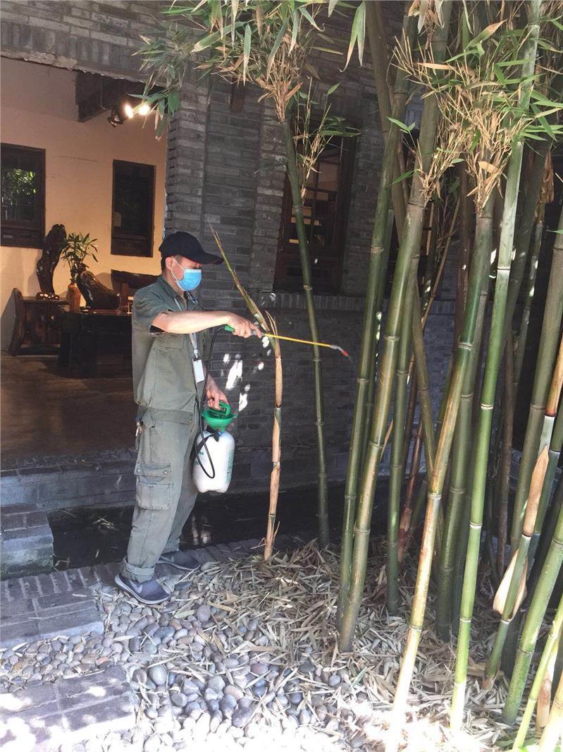温江区家庭捕鼠公司