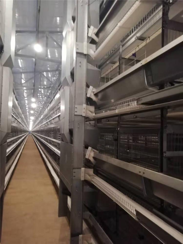 蛋鸡笼 长沙三层蛋鸡笼报价 自动化养鸡设备