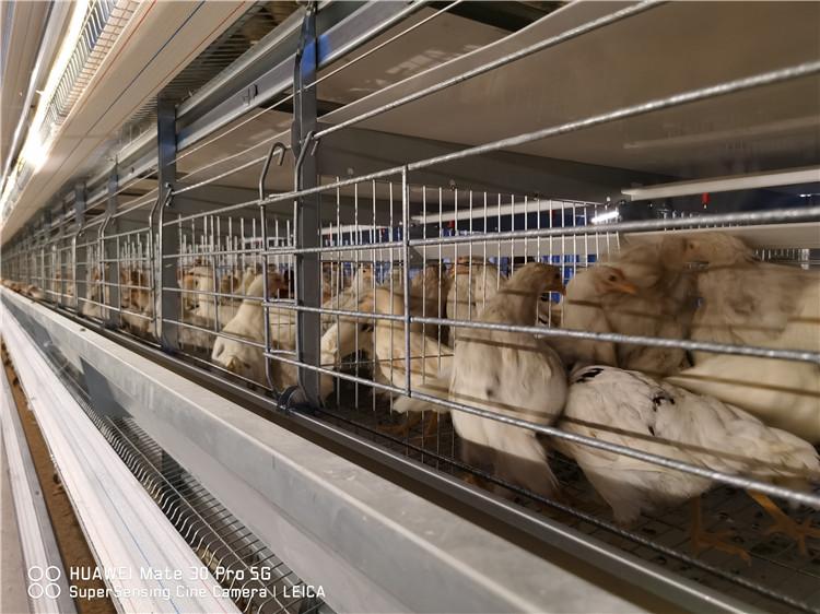自动化养殖设备厂 小型蛋鸡笼报价