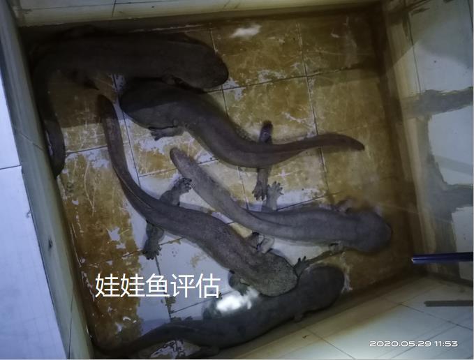 九江鱼塘评估公司