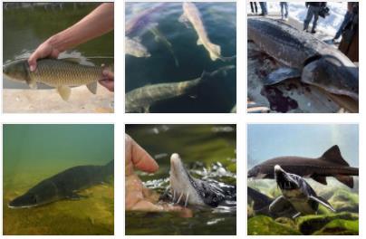 宜宾鱼塘评估标准