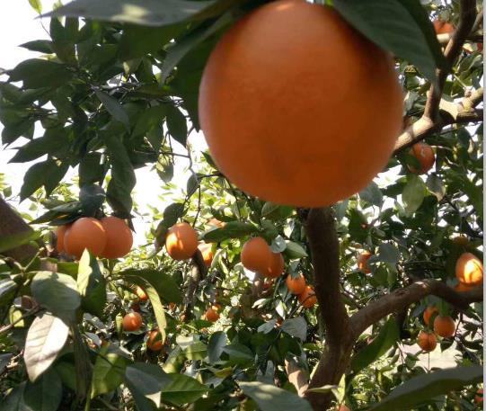 张家界果园资产评估标准