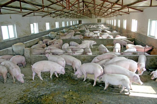 衡阳养殖场评估标准