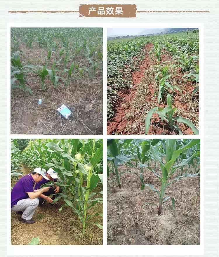 玉米地封闭除草剂
