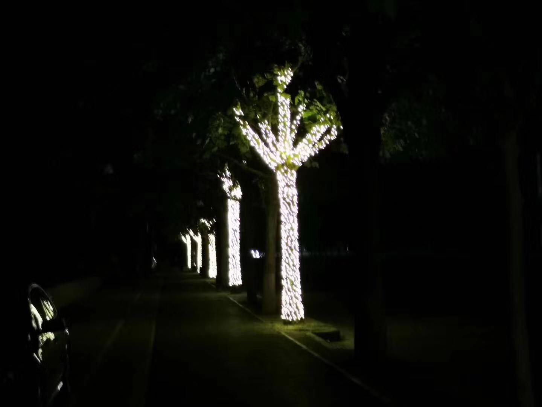 樹木亮化價格