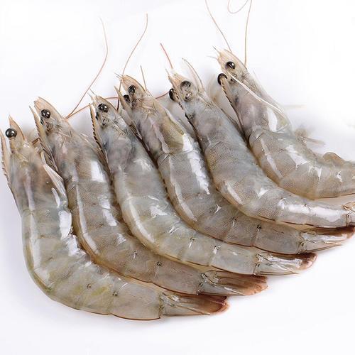 老船長鹽凍白蝦進口清關報關費用 專注冷凍海鮮進口