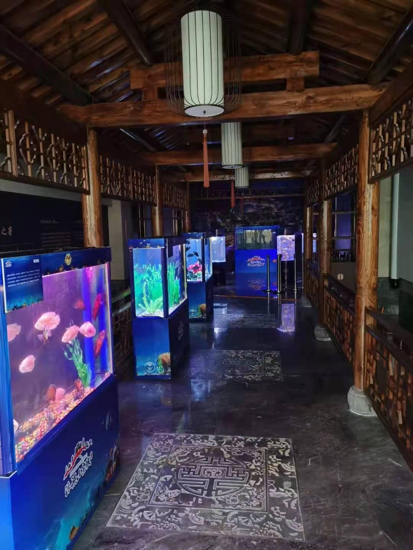 南宁海洋生物展租赁公司