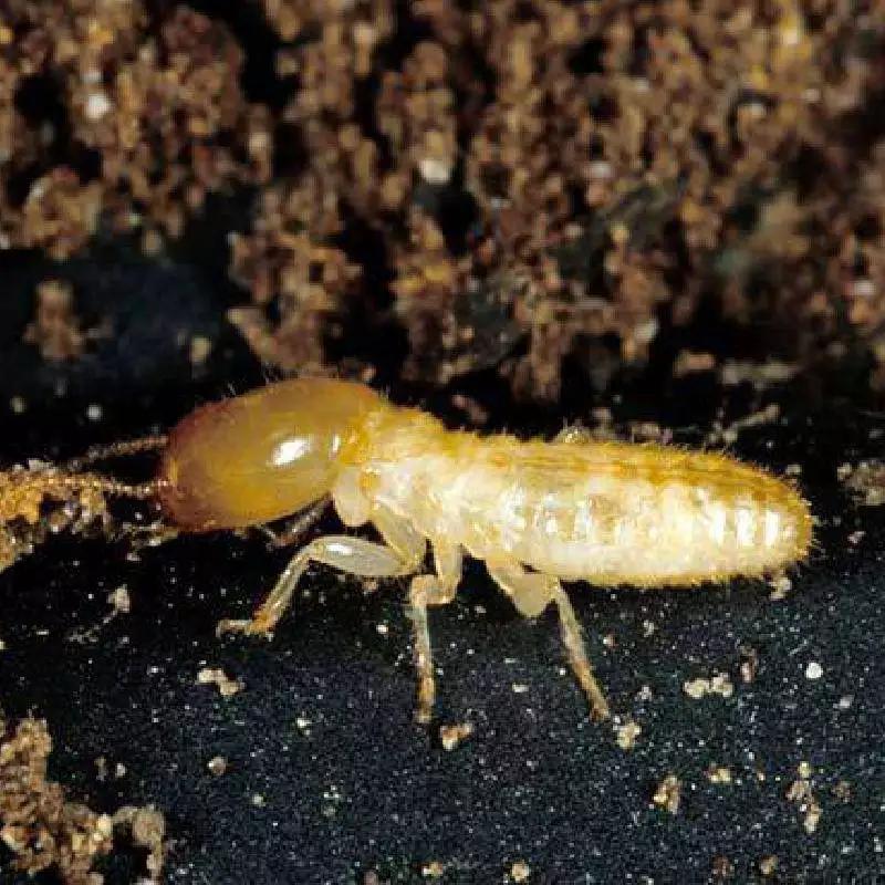 南昌白蚁防治公司 防治白蚁公司费用 专业灭白蚁 灭白蚁公司