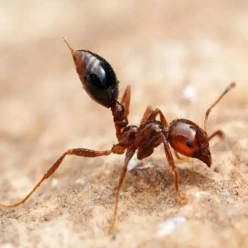 南昌红火蚁防治中心,专业消杀红火蚁,灭除红火蚁公司