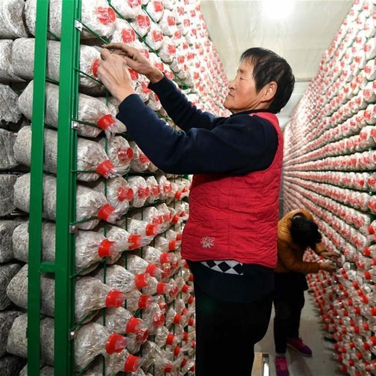 食用菌网格工厂化出菇架食用菌网片